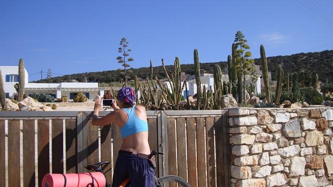 kaktusy paros (1)