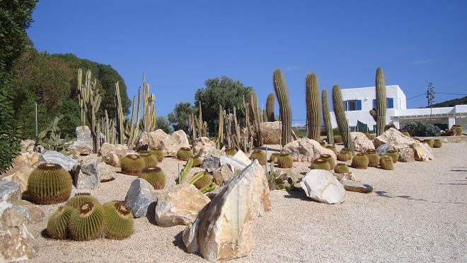 kaktusy paros (2)