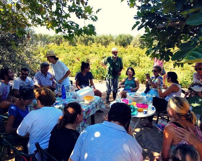 winobranie w grecji (14)