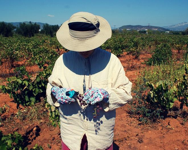 winobranie w grecji (15)