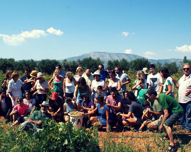 winobranie w grecji (2)