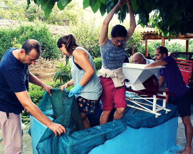 winobranie w grecji (4)