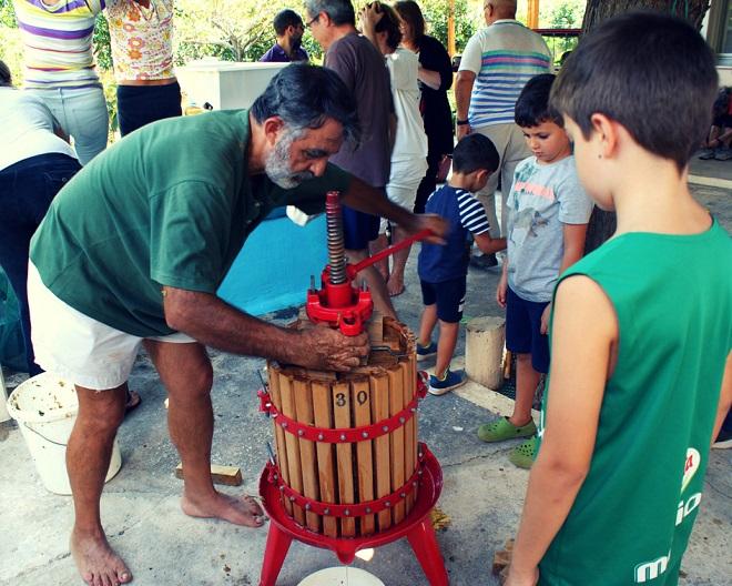 winobranie w grecji (6)