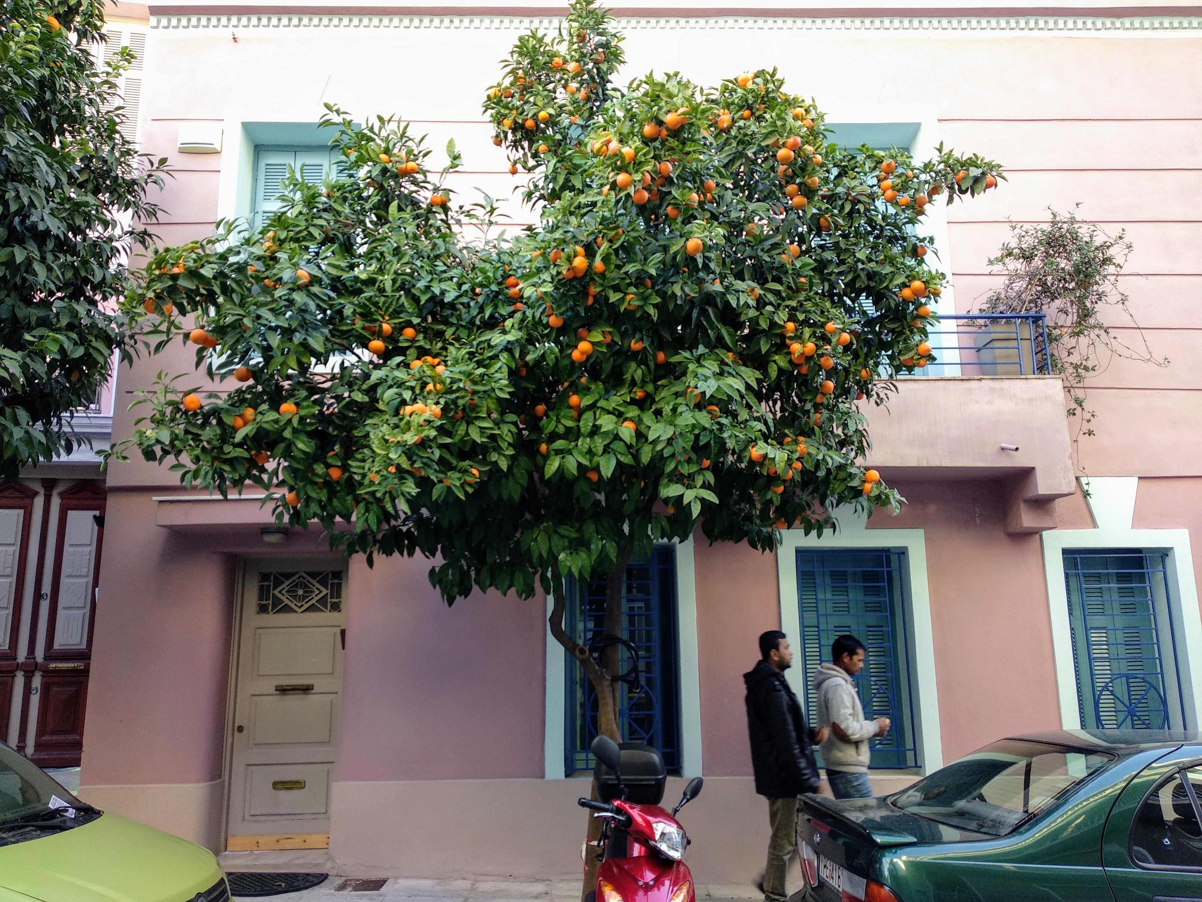 gorzka pomarańcza (3)